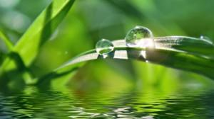 waterdropsonleaf